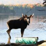 Охотник из Томской области стал фигурантом дела о браконьерстве