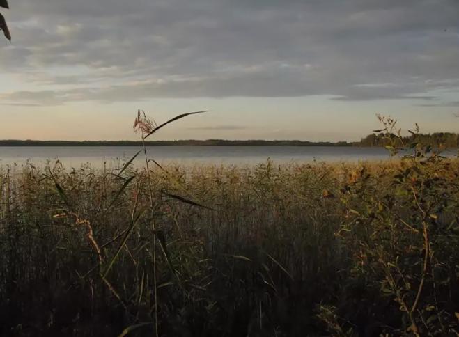 Уникальное озеро с редкими растениями погибает по вине человека