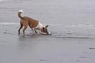 Пес – рыбак. Жители Сахалина складывают удочки