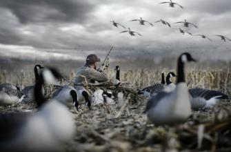 Разрешение на охоту получат даже те охотники, которым даже не из чего стрелять