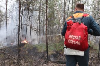 Охотников в сгоревших якутских лесах больше, чем дичи