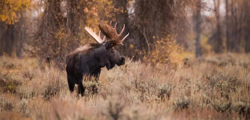 Охотник из Кировской области выстрелил в своего товарища