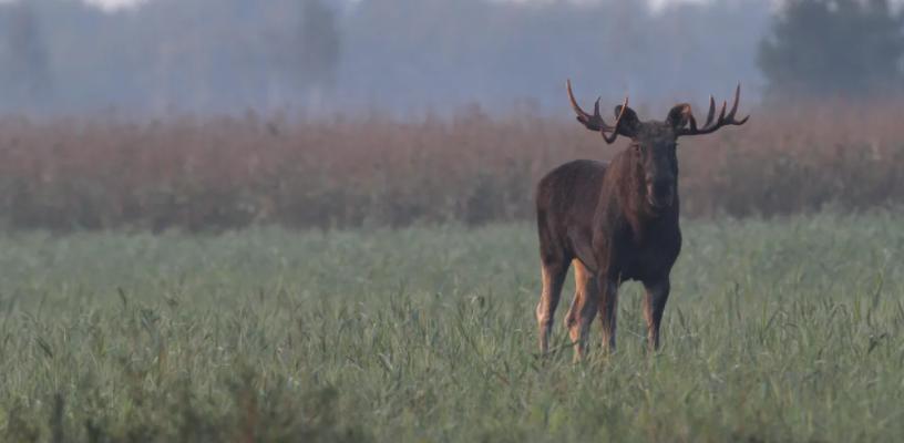 Новые правила охоты за дичью для жителей Прикамья Новые правила охоты за дичью для жителей Прикамья