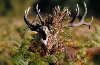 Охота на животных с необратимыми последствиями