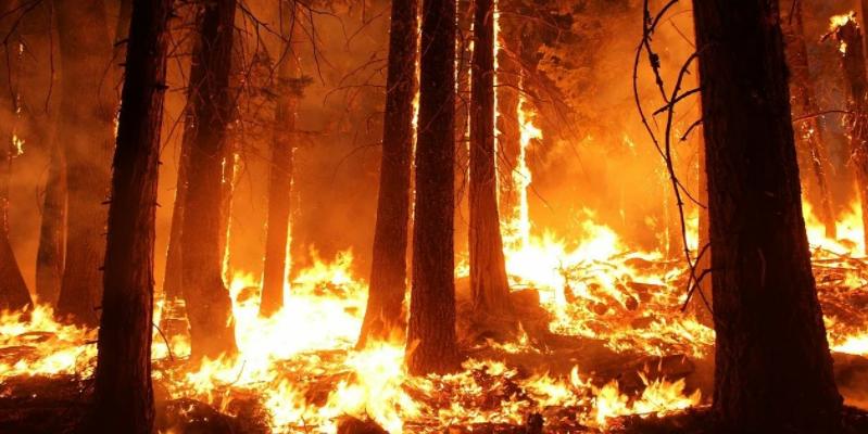 Рыбак решил поджечь лес. Но безнаказанным не останется