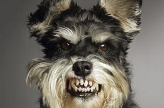 Охотник по возращению домой застрелил чужого пса