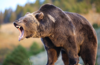 Медведь убил рыбака из Тюмени
