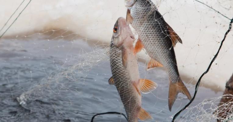 Рыбаки на Сахалине отыскали полные рыбы браконьерские сети
