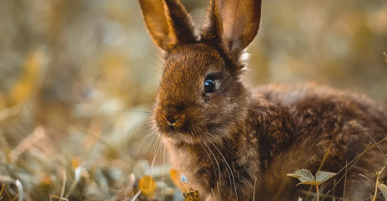 Охотник убивал зайцев с применением транспортного средства
