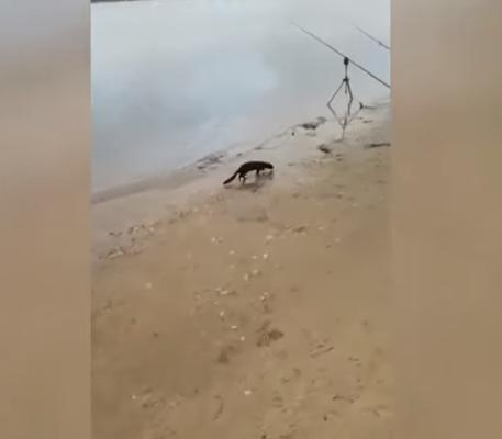 Маленький хищный зверь утащил у рыбаков самую крупную рыбку