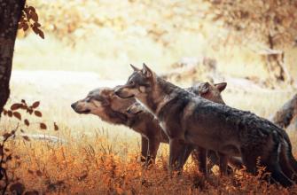 Охотники Хабаровска стараются не нарушать правила